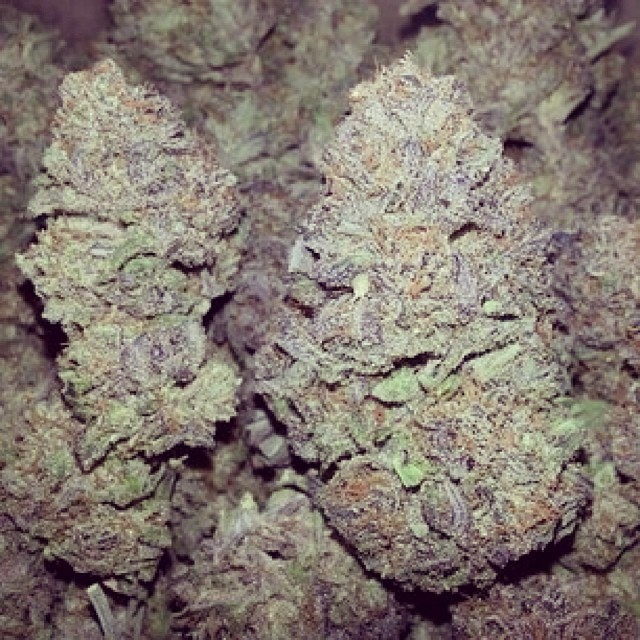 #beautiful #HortiLab #SweetPinkGrapefruitBX #buds #seeds available at the #HortiLabShop #Amsterdam #420 #710 #w420 #weedstagram #weedstagram420